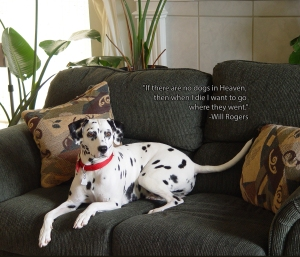 Dalmatian with Will Rogers quote